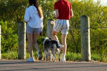 健康に良いのんびり散歩をしよう